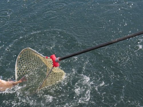 八景島シーパラダイス「うみファーム」でマダイを釣り上げようとして逃げられる様子