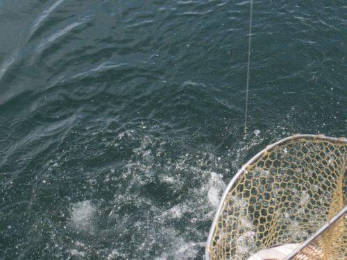 八景島シーパラダイス「うみファーム」でマダイを釣り上げる様子