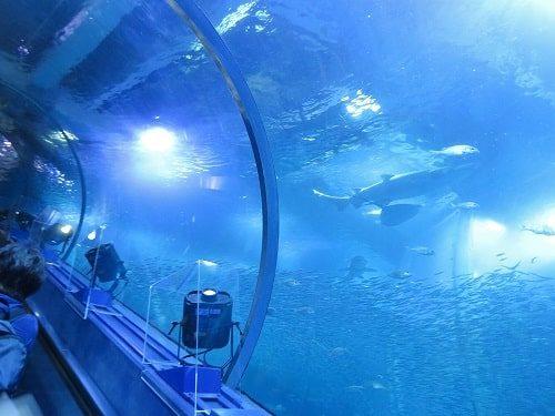八景島シーパラダイス「アクアミュージアム」の大水槽の中を上るエスカレーターから見える魚たち