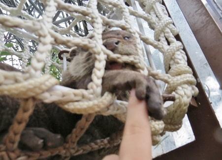 八景島シーパラダイス「アクアミュージアム」内のフォレストリウムでコツメカワウソとふれあい