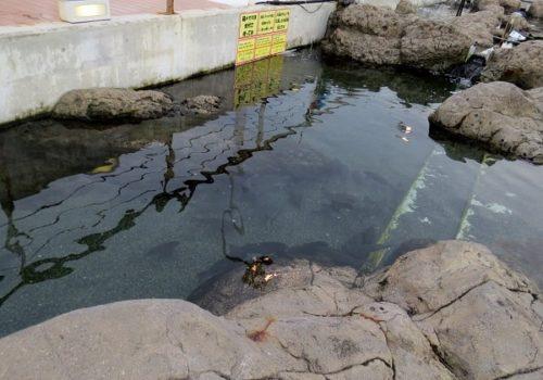 八景島シーパラダイス「ふれあいラグーン」の磯プールを泳ぐ魚