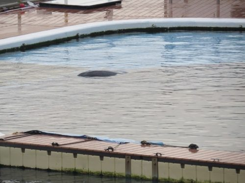 ホテルシーパラダイスイン客室から見える寝ているイルカ