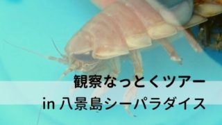 八景島シーパラダイス「うみファーム」の観察なっとくツアー体験レポート