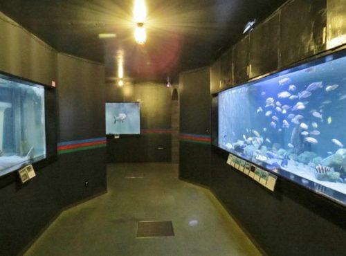 蓼科アミューズメント水族館の淡水魚水槽
