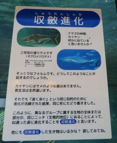 蓼科アミューズメント水族館の収斂進化について説明しているパネル