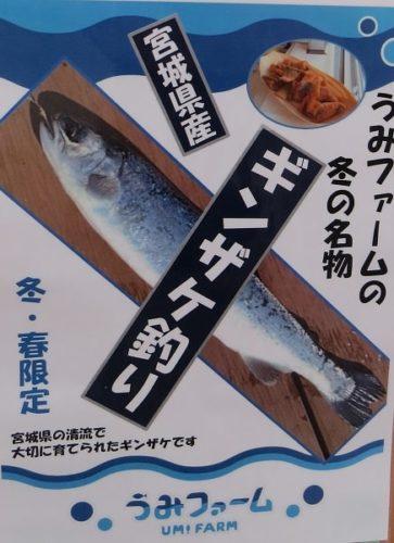 八景島シーパラダイス「うみファーム」のギンザケ釣り体験
