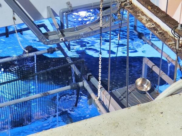 八景島シーパラダイスのガイドツアーなら大水槽の上からジンベエザメが見られる