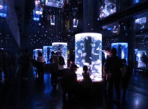 マクセルアクアパーク品川のクラゲ展示スペース「ジェリーフィッシュランブル」