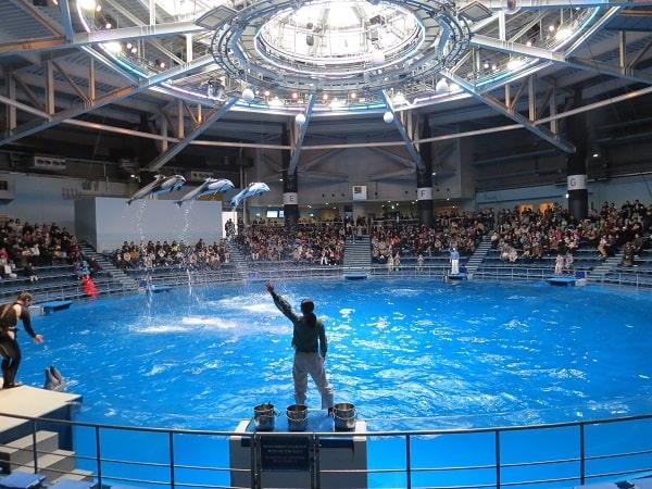 マクセルアクアパーク品川「ザ・スタジアム」で見られるイルカショーの、カマイルカ3頭による美しいコンビネーションジャンプ
