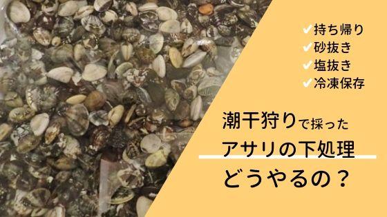 潮干狩りで採ったアサリの下処理(持ち帰り、砂抜き、塩抜き、冷凍保存)の方法