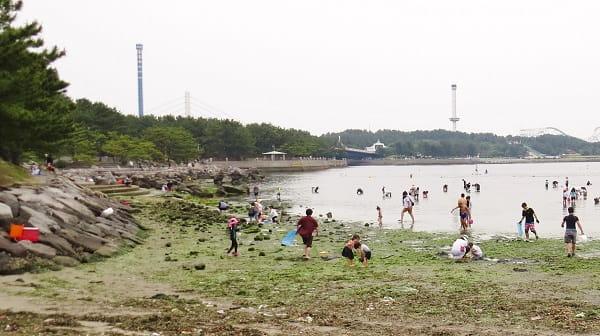 横浜 海の公園の磯場(干潮時の風景)
