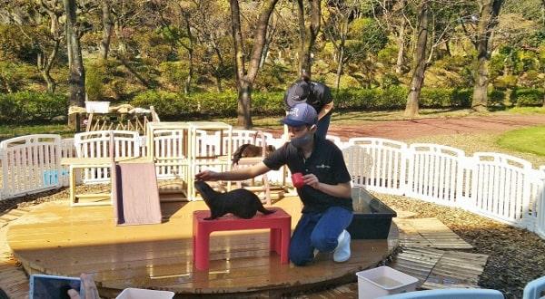 HANA・BIYORI ハナビヨリのコツメカワウソ(屋外エリアで訓練)